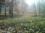 sejuknya kebun teh bercampur dengan hangatnya mentari pagi